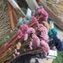 60g/Length 40-45CM Natural Fresh Ramillete Flores Eternell Millet FlowerBeauty Forever Flowers Bouquet For Farmhouse Home Decor,