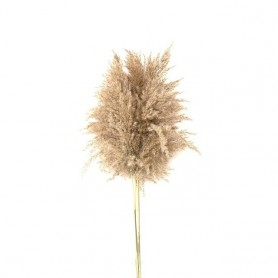 Light color wedding flowers bunch natural dried pampas grass flower beautiful reed christmas home wedding decoration phragmites,