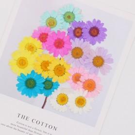 250pcs 2-4cm Pressed Dried Chrysanthemum Paludosum Flower For Jewelry Bookmark Phone Case Postcard Invitation Card Candle DIY, H